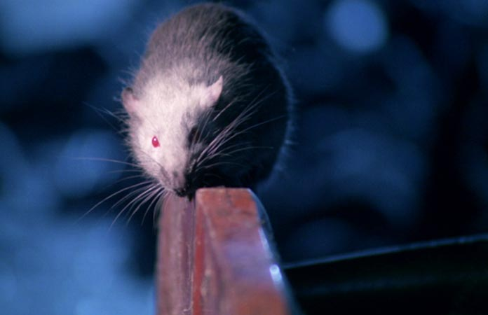 rats-hell-of-living-dead-blu-ray-review-header-graphic