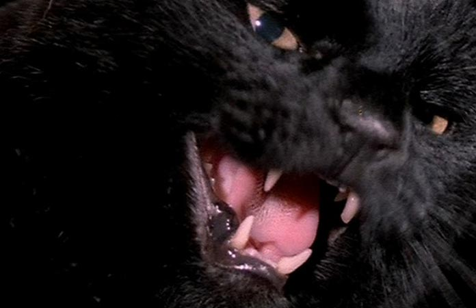 edgar-allen-poe-black-cats-blu-ray-review-header-graphic