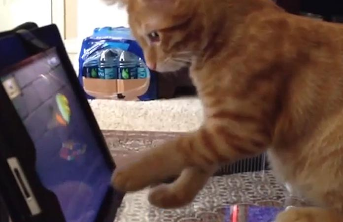 today-in-pop-culture-youtube-and-cats-header-graphic